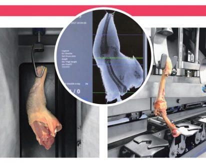 Une coupe précise le long de l'os sans endommager la viande ou l'osUne coupe précise le long de l'os sans endommager la viande ou l'os